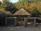Kippenhok en konijnenren met rieten dak Zelhem